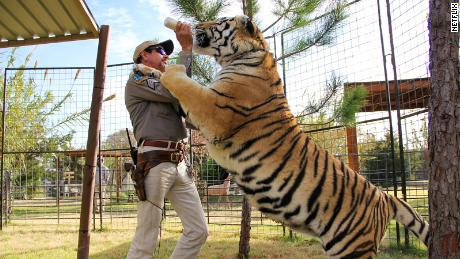 Tiger King Joe Exotic was reported to have more than 200 big cats at his zoo in Oklahoma.