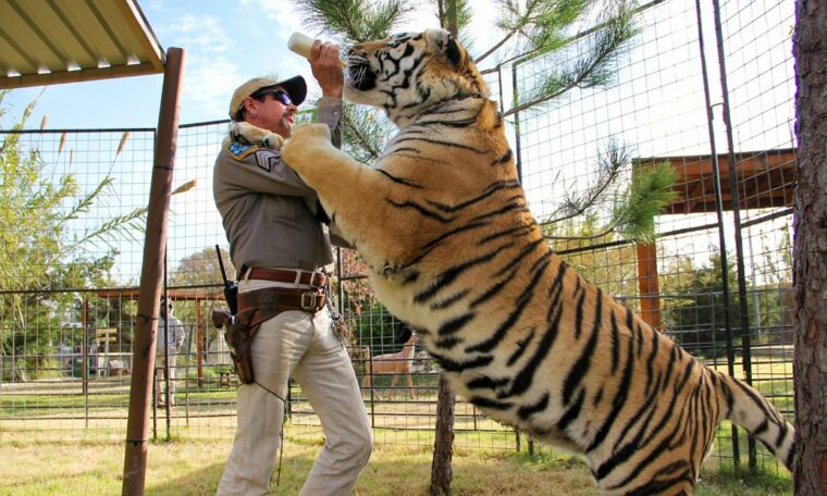 The team of 'Tiger King' Joe Exotic goes to Carole Baskin to get his zoo