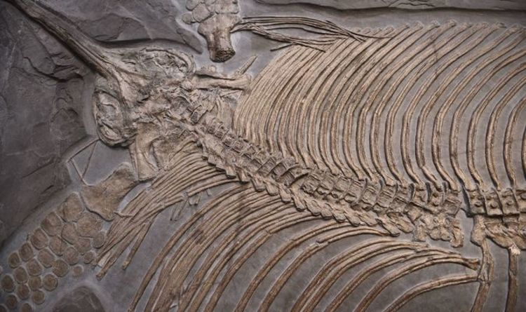 Archaeology news: Scientists discover remnants of prehistoric fossil's last meal | World | News