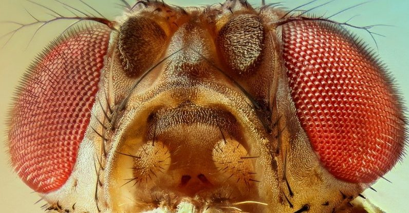 Flies Fall For Optical Illusions Just Like Us, Despite Millions of Years of Evolution