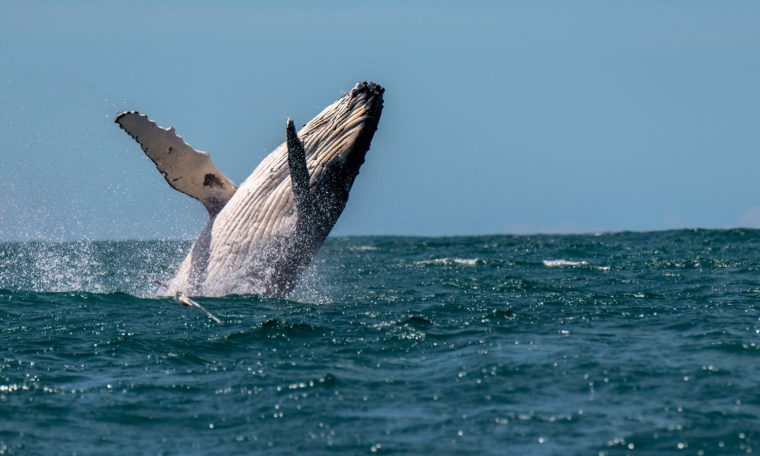 A whale injured three women when protecting her calf. Pic: Stock image