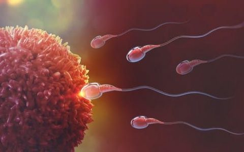 "<span class=""caption"">Sperm actually move like a spinning top.</span> <span class=""attribution""><a class=""link rapid-noclick-resp"" href=""https://www.shutterstock.com/image-illustration/sperm-egg-cell-natural-fertilization-3d-1077682163"" rel=""nofollow noopener"" target=""_blank"" data-ylk=""slk:Yurchanka Siarhei/ Shutterstock"">Yurchanka Siarhei/ Shutterstock</a></span>"