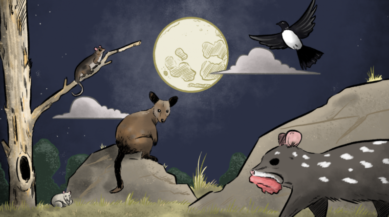 How the phases of the moon affect Native Australian wildlife