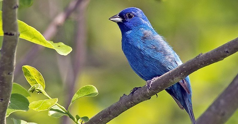 Why blue is one of the brightest colors we see in nature