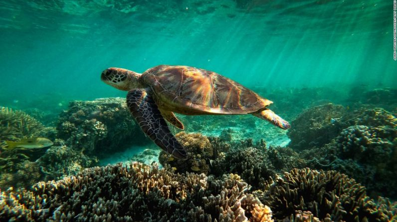 The Great Barrier Reef's Future is Uncertain: New Research Details""