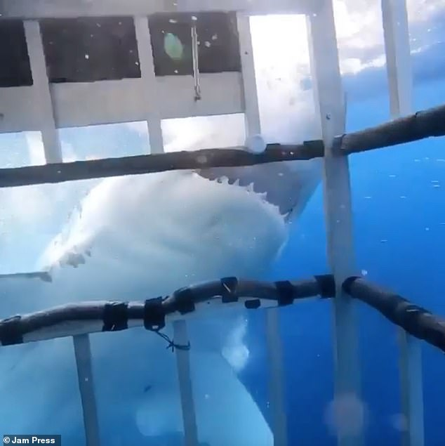 Jim Partington, a shark expert from Manchester, observed a dive with three women near the island of Guadeloupe
