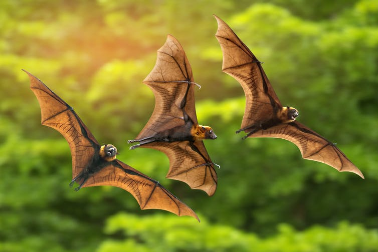 Three bats flying above the trees.