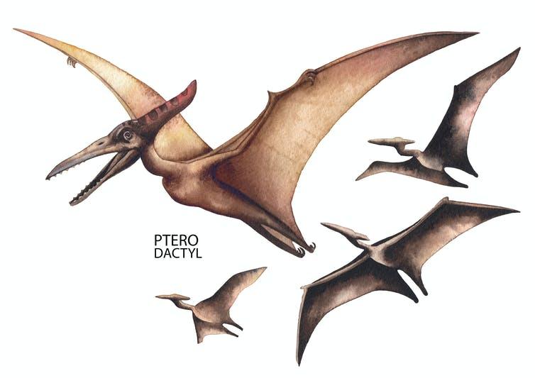 Watercolor description of four steroidals in flight.