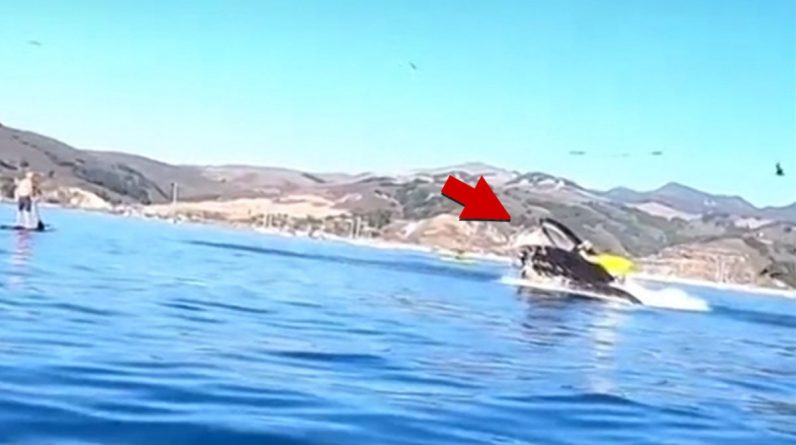 Whale near swallowing kayaks off the coast of Avila, California