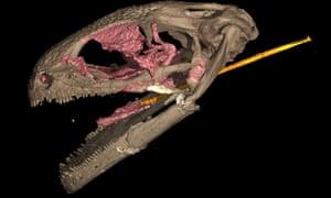 CT scan of the alveolar cranium
