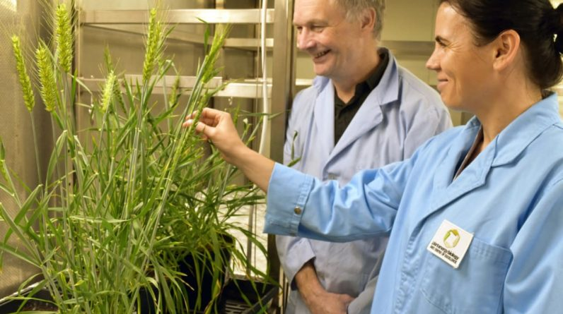 Map of wheat genes reveals surprising variation in genes worldwide