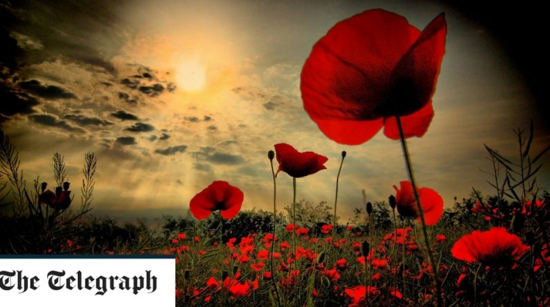 The process of remembering poppies, memories and why is important