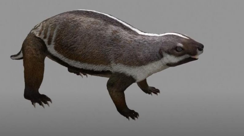 Scientists describe a mammal that lived 66 million years ago