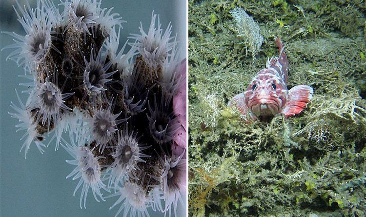 12 new species of deep-sea creatures have been discovered