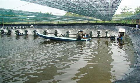 Australia supports environmental monitoring of aquaculture wetlands in the Cà Mau