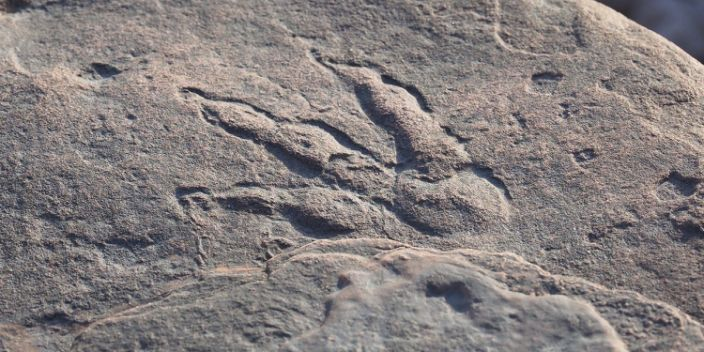 A four-year-old boy in Wales has discovered a 220 million year old dinosaur buck
