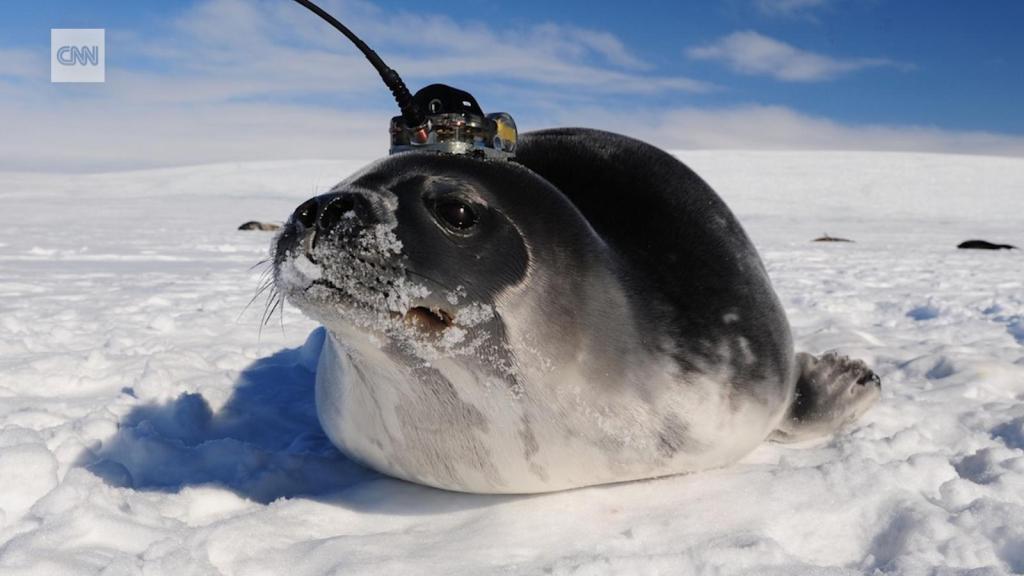 Seals in Antarctica help solve the mystery in Antarctica