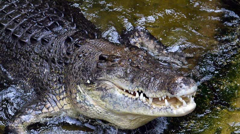 Australia.  The man opens his jaw and escapes the crocodile attack