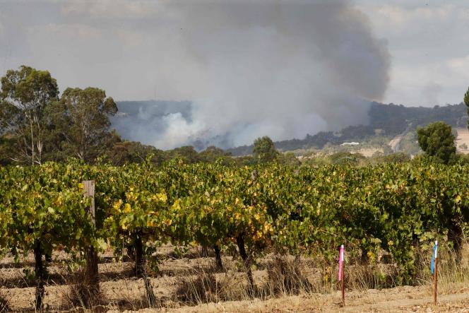 A wildfire threatens a vineyard in Baskerville, a suburb of Perth, on February 3.