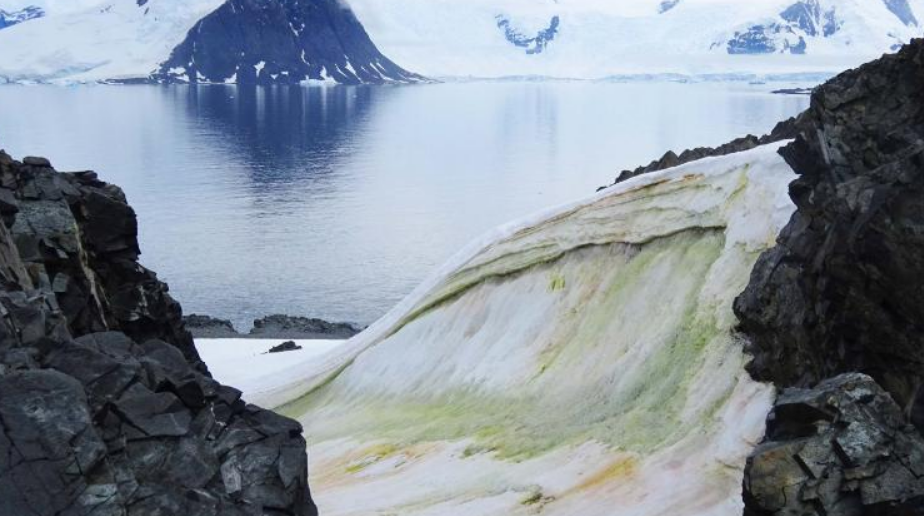 Climate change will make green ice worse in Antarctica