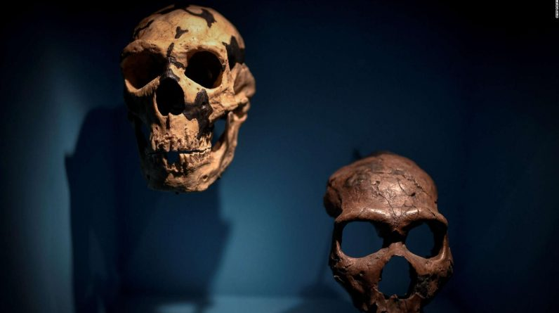 Study that Neanderthals can make sounds similar to humans |  Video