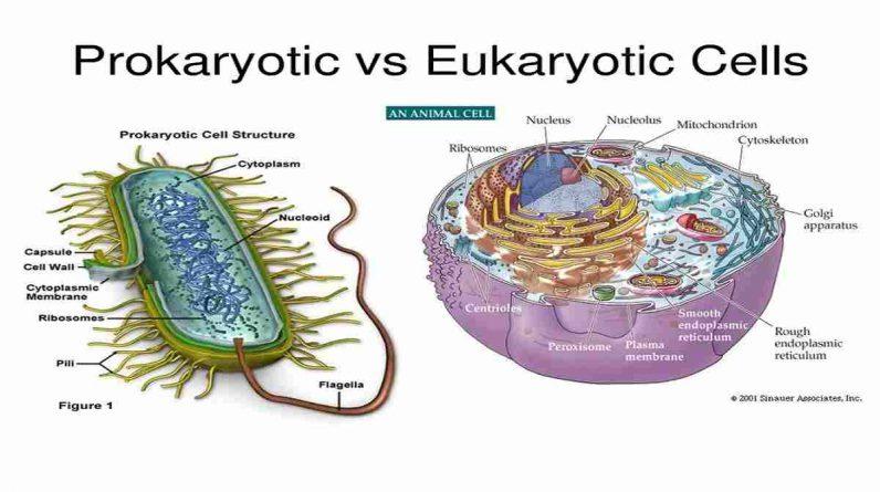 Pengertian sel, jenis dan fungsi makhluk hidup