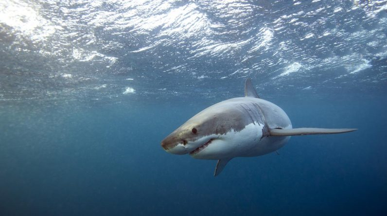 A person who came to fish is violently attacked by a shark