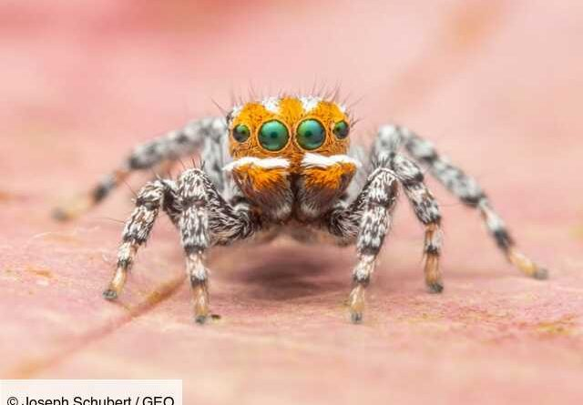 Australia: Discovers a new spider named Nemo after the cartoon