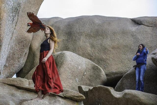 Photo Saturday, the dancer returned with the red parrots.  © Victoria K.
