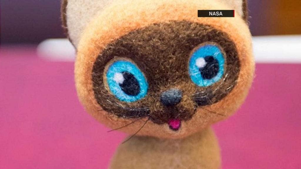 Valuable companion of astronauts, stuffed cat