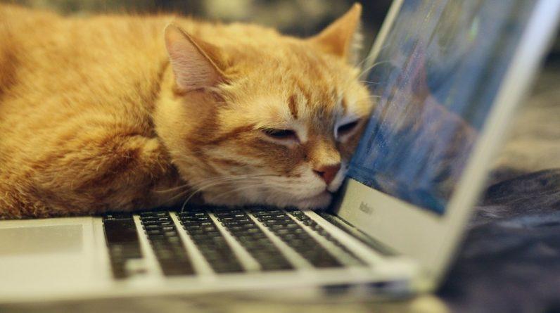 """Los Mac sufren """"uno de los peores 'hackeos'"""" en la historia del 'software' de Apple"""