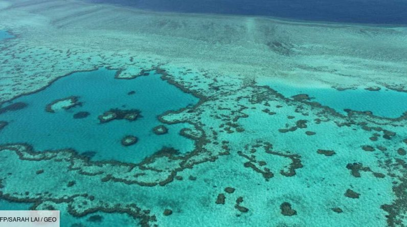 """Australia: Techniques to """"slow down the disappearance of the Great Barrier Reef in 20 years"""""""