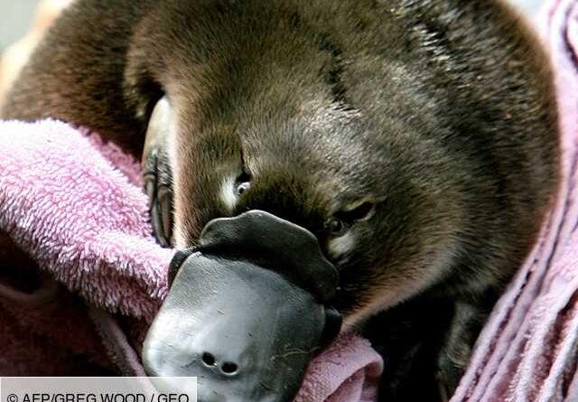 Australia to open first Platypus refuge