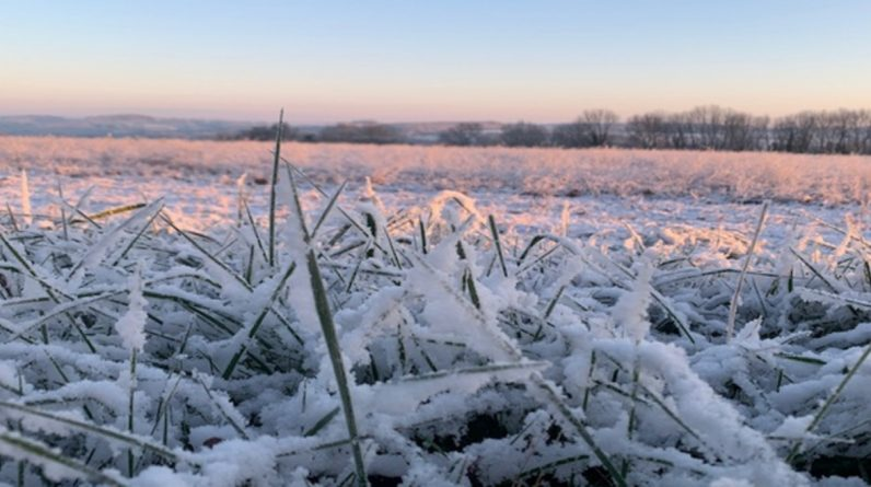 Winter cold and severe frosts: Numerous logs in the Middle East and Southeast