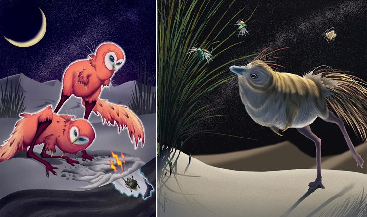 Bird-like dinosaurs had unusual night vision