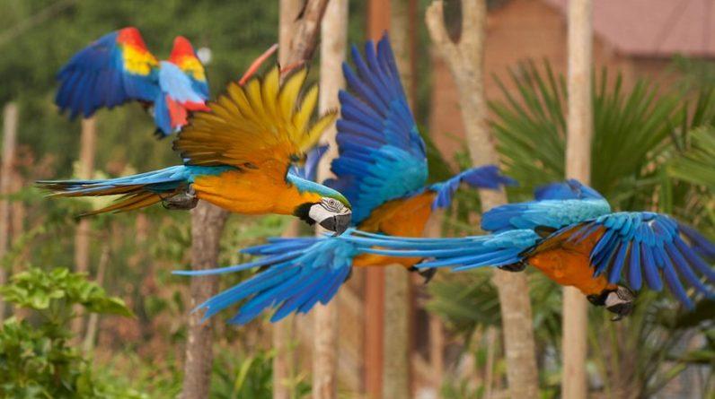 Le perroquet contribue à la sauvegarde d'un nombre incalculable d'autres espèces animales et végétales