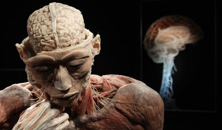 An ambitious project aimed at recreating the human brain