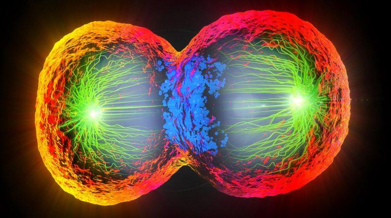 Bioengineers are developing a method of comparing cells between species