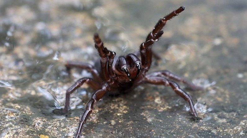 Environment.  Australia may experience Tarantula invasion