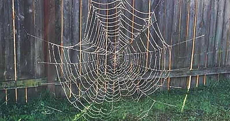 They will find a large, perfectly shaped spider web in their garden