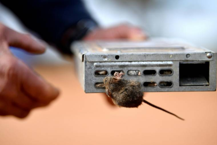 A mouse trap on a farm in Tottenham, Eastern Australia on June 2, 2021 (AFP / Saeed KHAN)