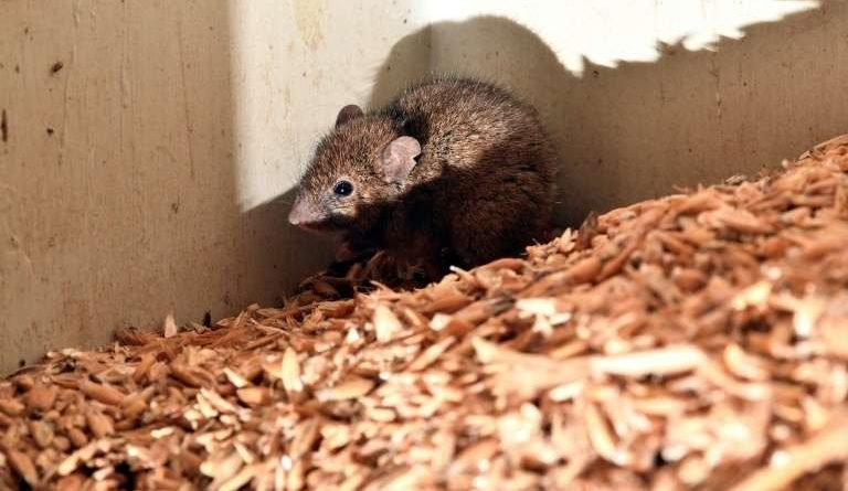 Australian prisoners expelled due to mouse invasion