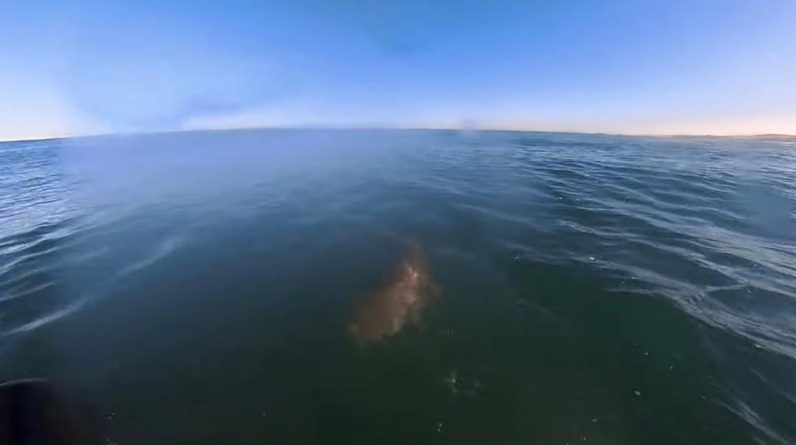 Surfer pictures the moment he miraculously escapes a shark