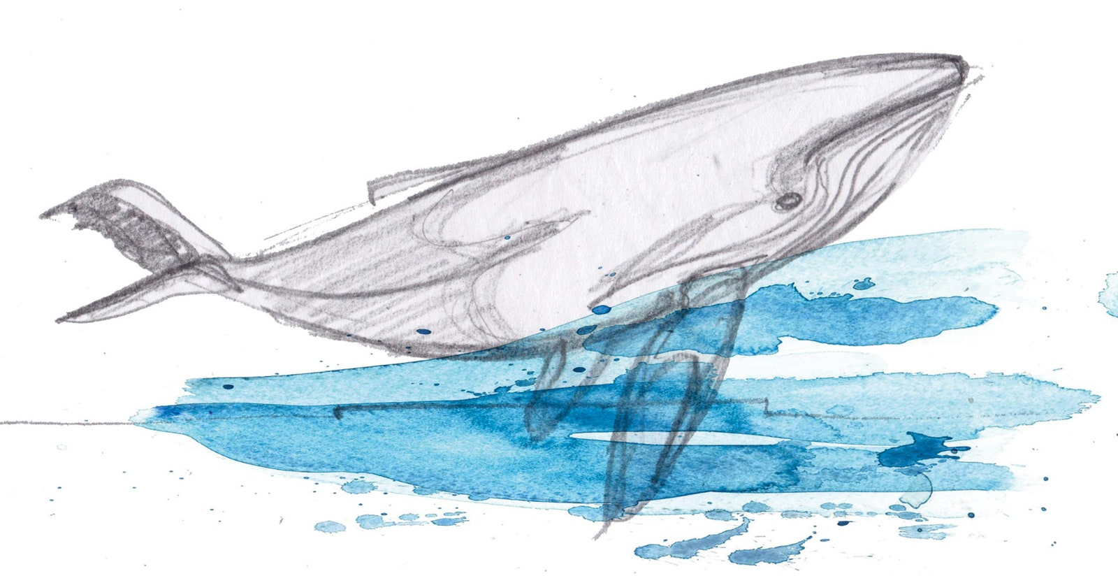 Croques de Inspiration de l Underwater Ocean Discovery Center.