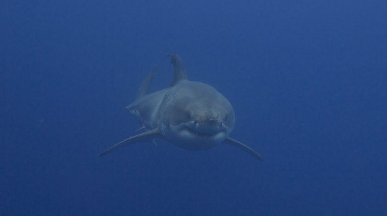 "Don't call them ""shark attacks"" anymore"