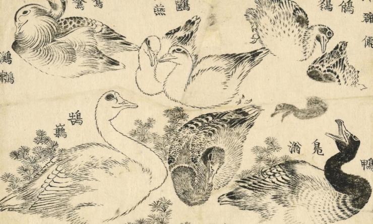 Une oeuvre d'Hokusai qui représente des canards