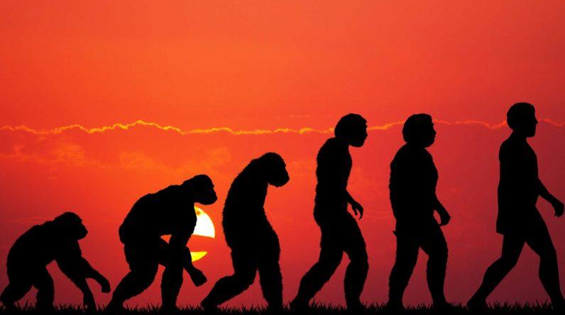 L'évolution de l'Homme implique bien plus qu'une seule lignée, la récente définition de l'espèce Homo longi en est la preuve. © adrenalinapura, Fotolia