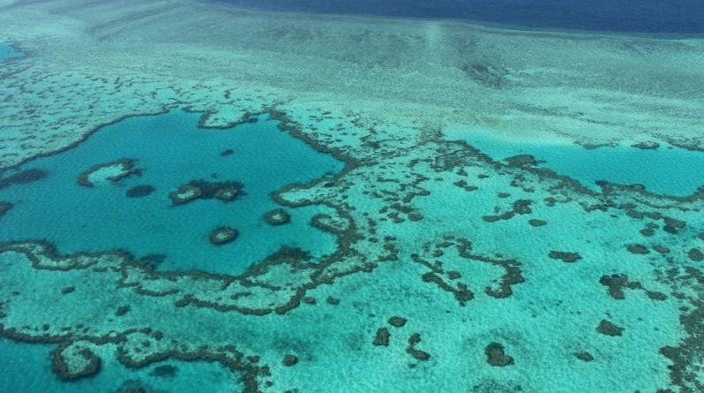 """News    Australia: The chances of the Great Barrier Reef are """"very bad"""""""