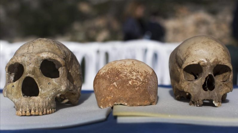 Only 5% of our genes distinguish us from Neanderthals