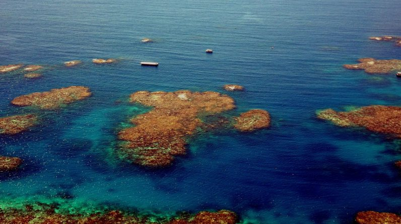 """Scientists say the Great Barrier Reef outlook is """"very bad"""""""